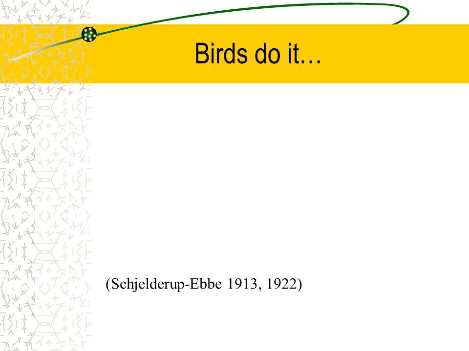 Birds do it… (Schjelderup-Ebbe 1913, 1922)