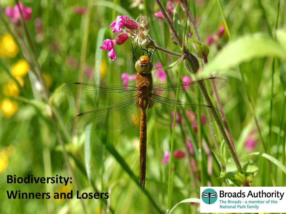 Aren t the Broads Brilliant ! Biodiversity: Winners and Losers