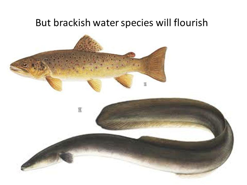 But brackish water species will flourish