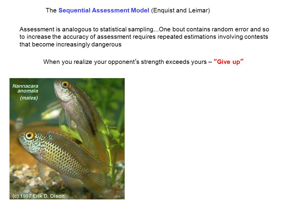 The Sequential Assessment Model (Enquist and Leimar) Assessment is analogous to statistical sampling...One bout contains random error and so to increase the accuracy of assessment requires repeated estimations involving contests that become increasingly dangerous When you realize your opponent's strength exceeds yours – Give up