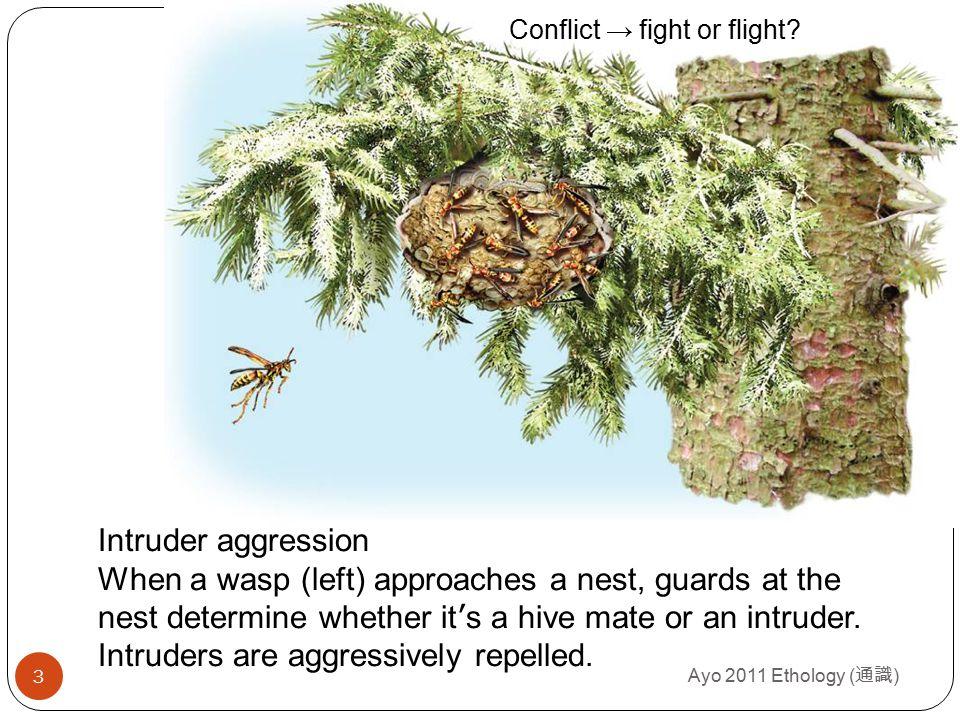 Fight or flight.