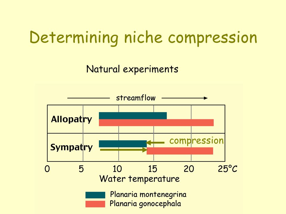 Niche compression  Realized niches are narrower than fundamental niches, therefore the species occupies a narrower range of habitats than it would in the absence of competition.