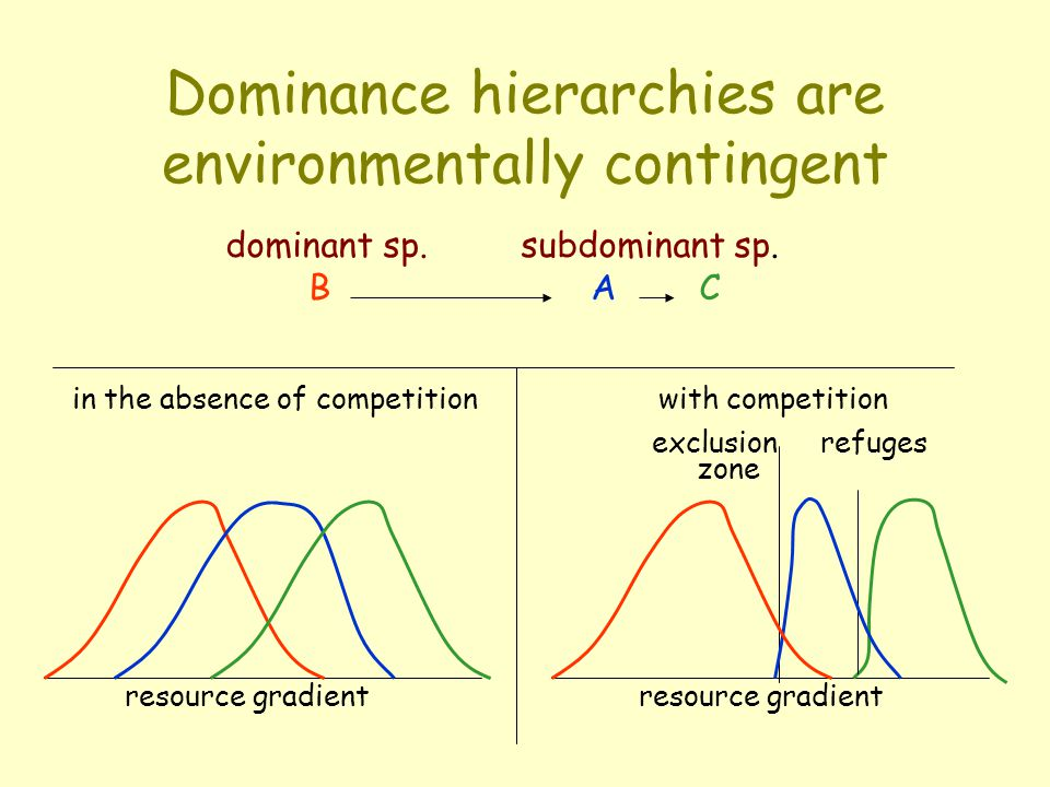 Dominance hierarchy A B C dominant sp. subdominant sp.