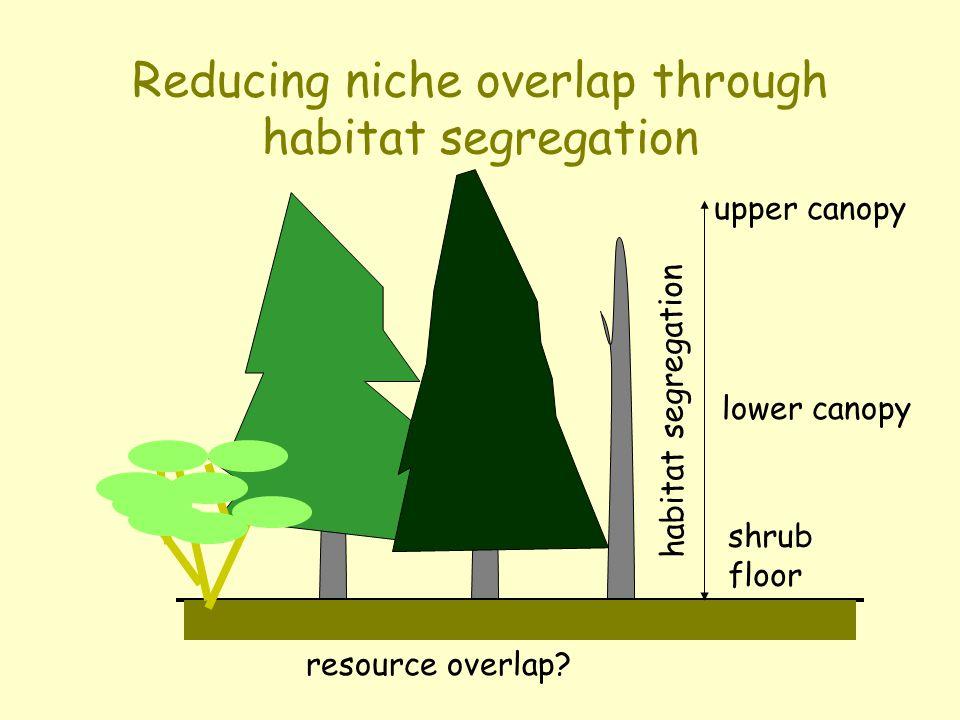 Reducing niche overlap through habitat segregation upper canopy lower canopy shrub floor habitat segregation resource overlap?