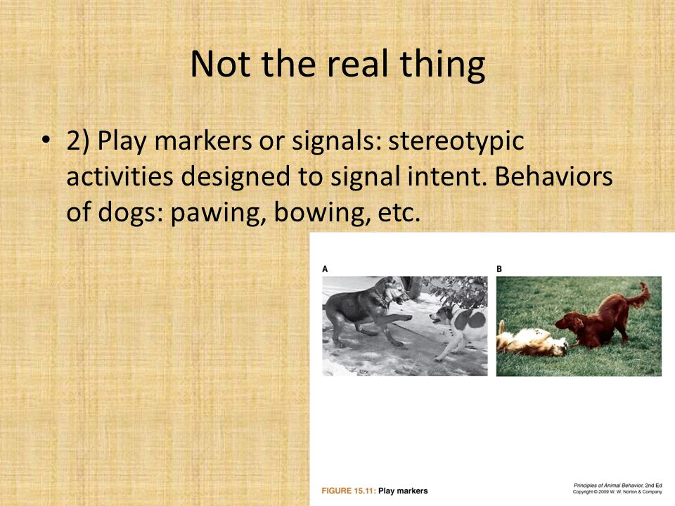 Not the real thing 2) Play markers or signals: stereotypic activities designed to signal intent. Behaviors of dogs: pawing, bowing, etc.
