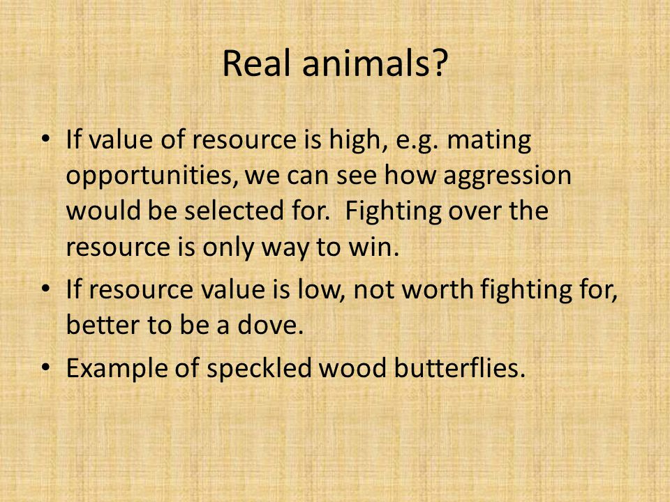 Real animals? If value of resource is high, e.g. mating opportunities, we can see how aggression would be selected for. Fighting over the resource is