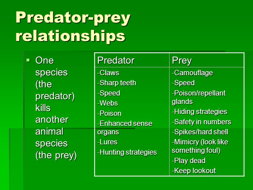 Predator-prey relationships  One species (the predator) kills another animal species (the prey) PredatorPrey -Claws -Sharp teeth -Speed -Webs -Poison