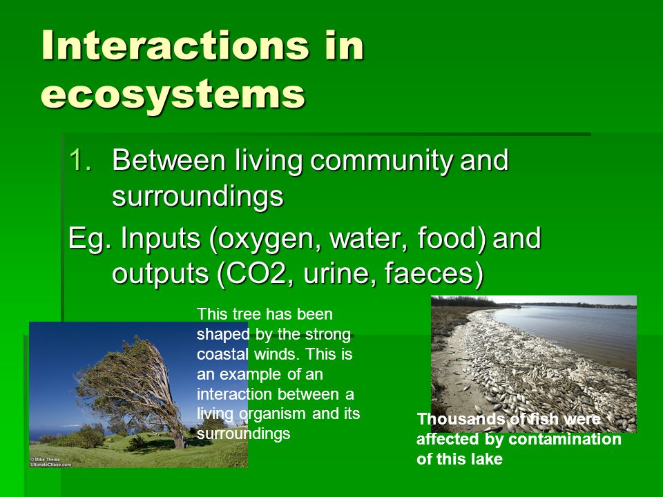 Interactions in ecosystems 1.Between living community and surroundings Eg.