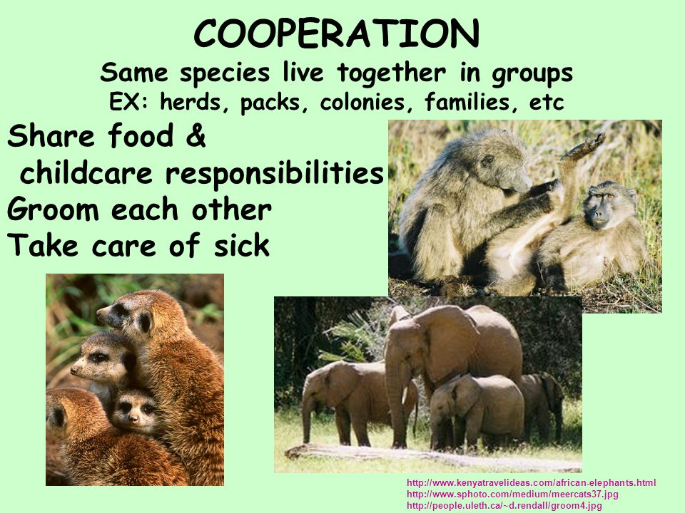 COOPERATION Same species live together in groups EX: herds, packs, colonies, families, etc http://www.kenyatravelideas.com/african-elephants.html http://www.sphoto.com/medium/meercats37.jpg http://people.uleth.ca/~d.rendall/groom4.jpg Share food & childcare responsibilities Groom each other Take care of sick