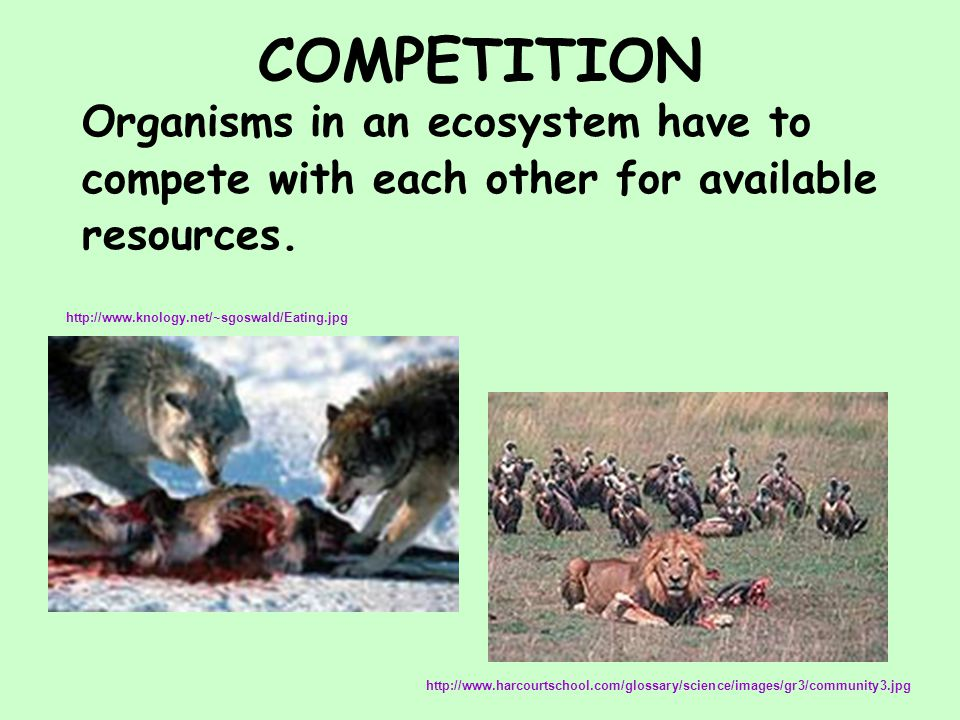COMPETITION Organisms in an ecosystem have to compete with each other for available resources.