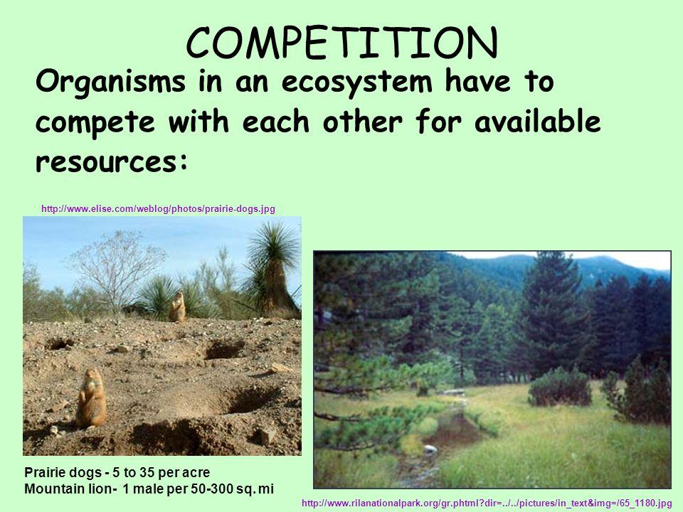 COOPERATION Same species live together in groups EX: herds, packs, colonies, families, etc Hunt in packs Provide protection http://www.knology.net/~sgoswald/Eating.jpg http://rosswarner.com/zebras1.jpg
