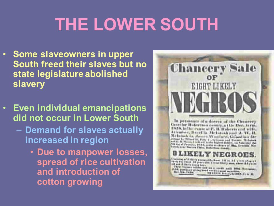 THE LOWER SOUTH Some slaveowners in upper South freed their slaves but no state legislature abolished slavery Even individual emancipations did not occur in Lower South –Demand for slaves actually increased in region Due to manpower losses, spread of rice cultivation and introduction of cotton growing