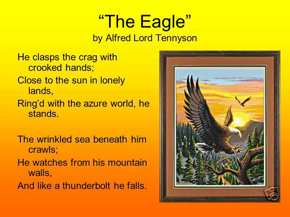 """The Eagle"" by Alfred Lord Tennyson He clasps the crag with crooked hands; Close to the sun in lonely lands, Ring'd with the azure world, he stands. T"
