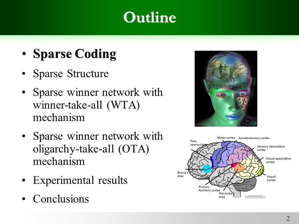 2 Outline Sparse CodingSparse Coding Sparse Structure Sparse winner network with winner-take-all (WTA) mechanism Sparse winner network with oligarchy-take-all (OTA) mechanism Experimental results Conclusions Broca's area Pars opercularis Motor cortex Somatosensory cortex Sensory associative cortex Primary Auditory cortex Wernicke's area Visual associative cortex Visual cortex
