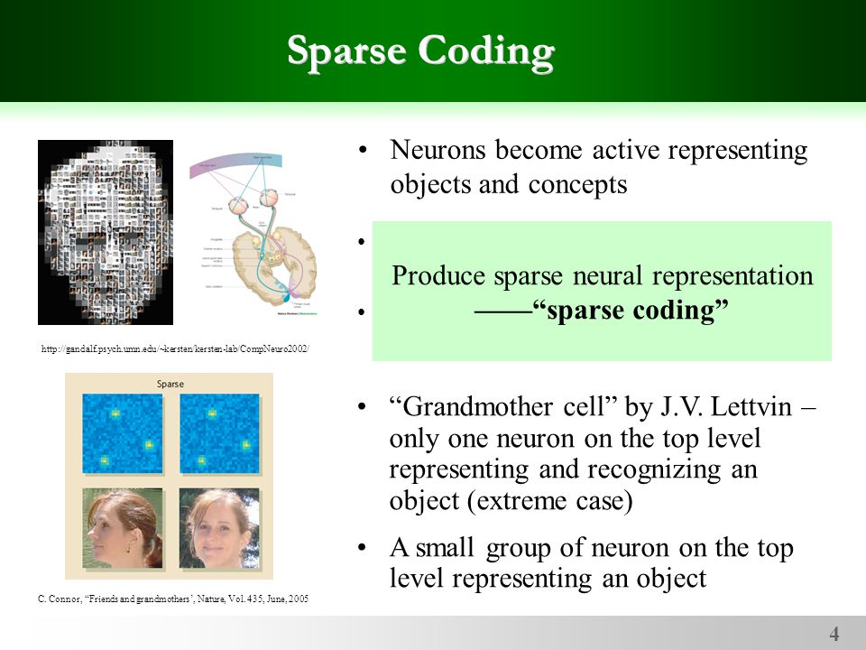 4 Sparse Coding Neurons become active representing objects and concepts http://gandalf.psych.umn.edu/~kersten/kersten-lab/CompNeuro2002/ C.