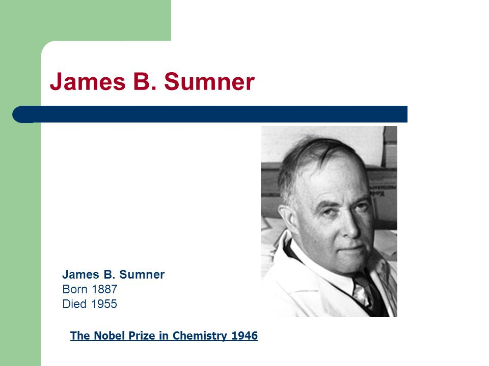 James B. Sumner James B. Sumner Born 1887 Died 1955 The Nobel Prize in Chemistry 1946