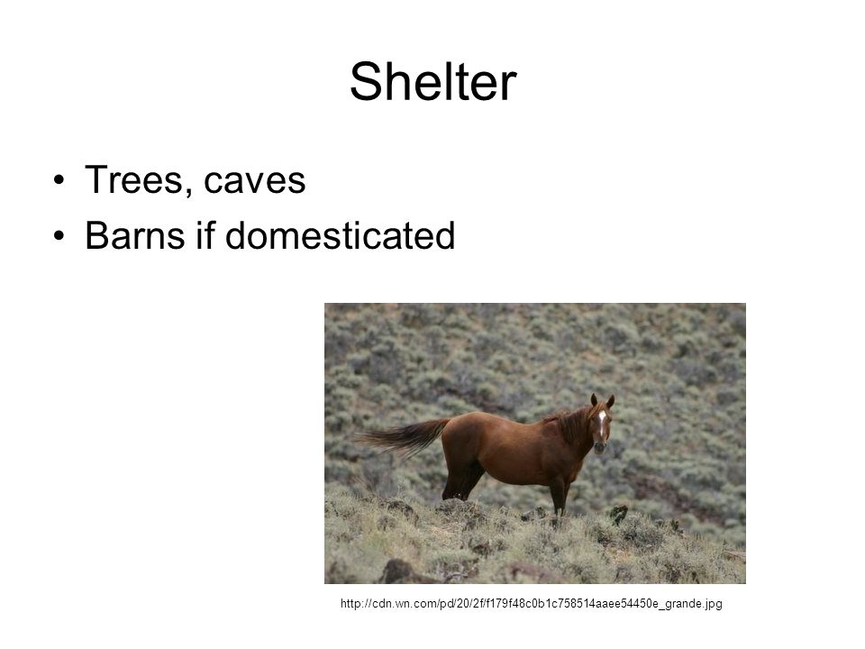 Shelter Trees, caves Barns if domesticated http://cdn.wn.com/pd/20/2f/f179f48c0b1c758514aaee54450e_grande.jpg