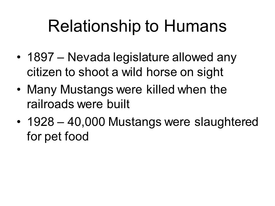 Relationship to Humans 1897 – Nevada legislature allowed any citizen to shoot a wild horse on sight Many Mustangs were killed when the railroads were built 1928 – 40,000 Mustangs were slaughtered for pet food