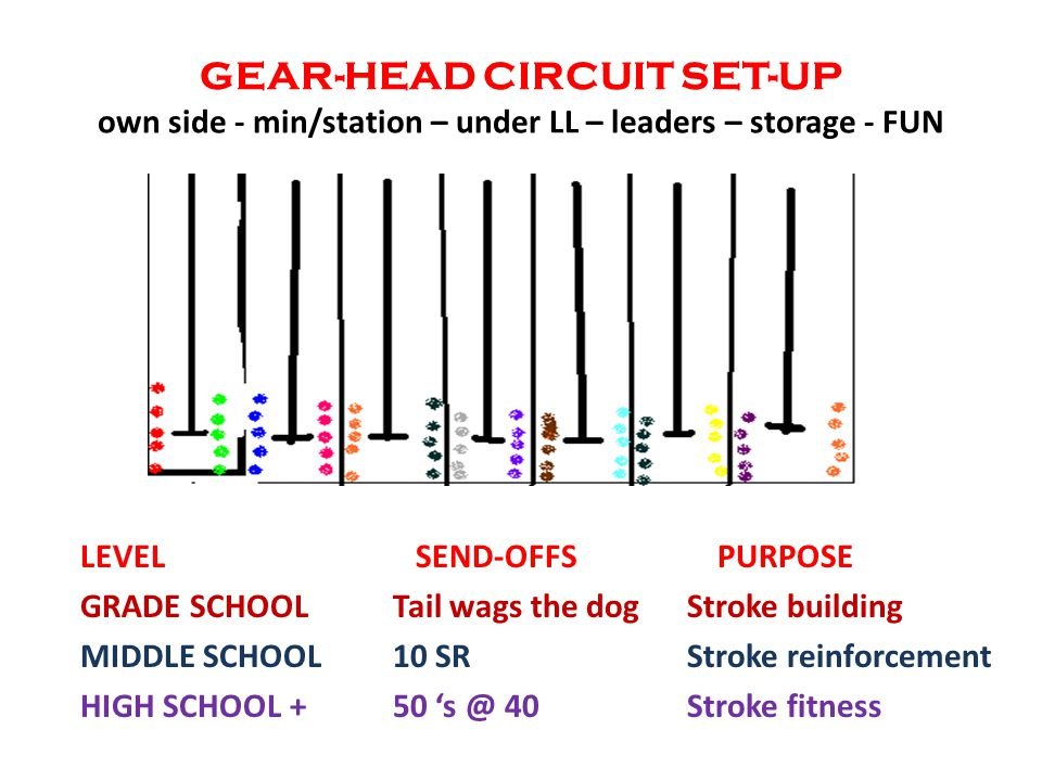 GEAR-HEAD CIRCUIT SET-UP own side - min/station – under LL – leaders – storage - FUN LEVEL SEND-OFFS PURPOSE GRADE SCHOOLTail wags the dog Stroke building MIDDLE SCHOOL10 SR Stroke reinforcement HIGH SCHOOL +50 's @ 40 Stroke fitness