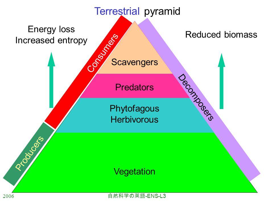 2006 自然科学の英語 -ENS-L3 Vegetation Consumers Producers Decomposers Phytofagous Herbivorous Predators Scavengers Energy loss Increased entropy Reduced biomass Terrestrial pyramid