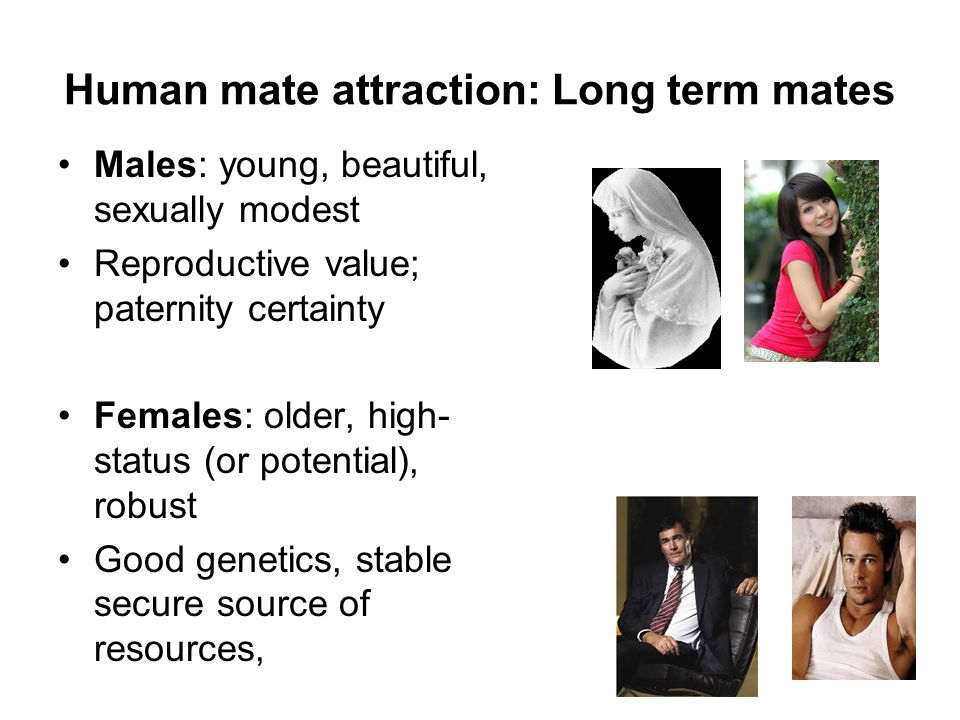 Human mate attraction: Long term mates Males: young, beautiful, sexually modest Reproductive value; paternity certainty Females: older, high- status (or potential), robust Good genetics, stable secure source of resources,