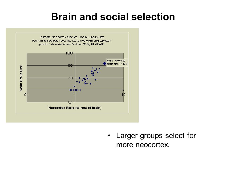 Brain and social selection Larger groups select for more neocortex.