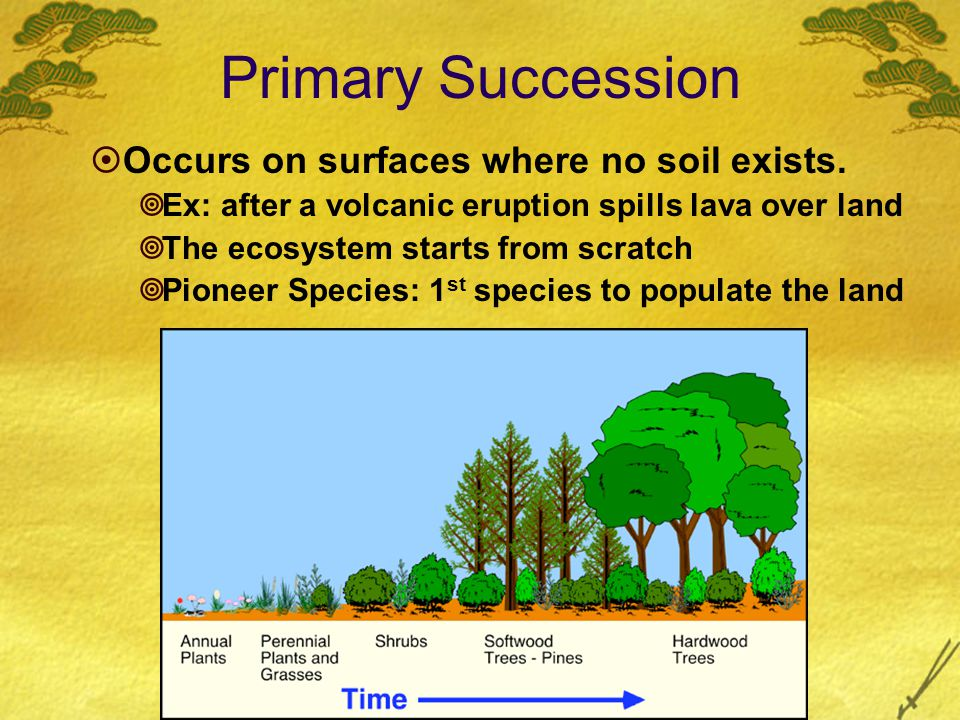 Primary Succession  Occurs on surfaces where no soil exists.  Ex: after a volcanic eruption spills lava over land  The ecosystem starts from scratc