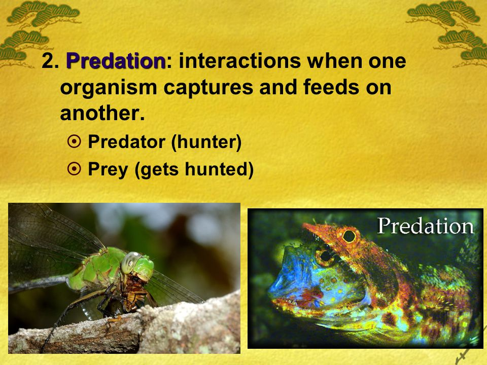 Predation 2. Predation: interactions when one organism captures and feeds on another.