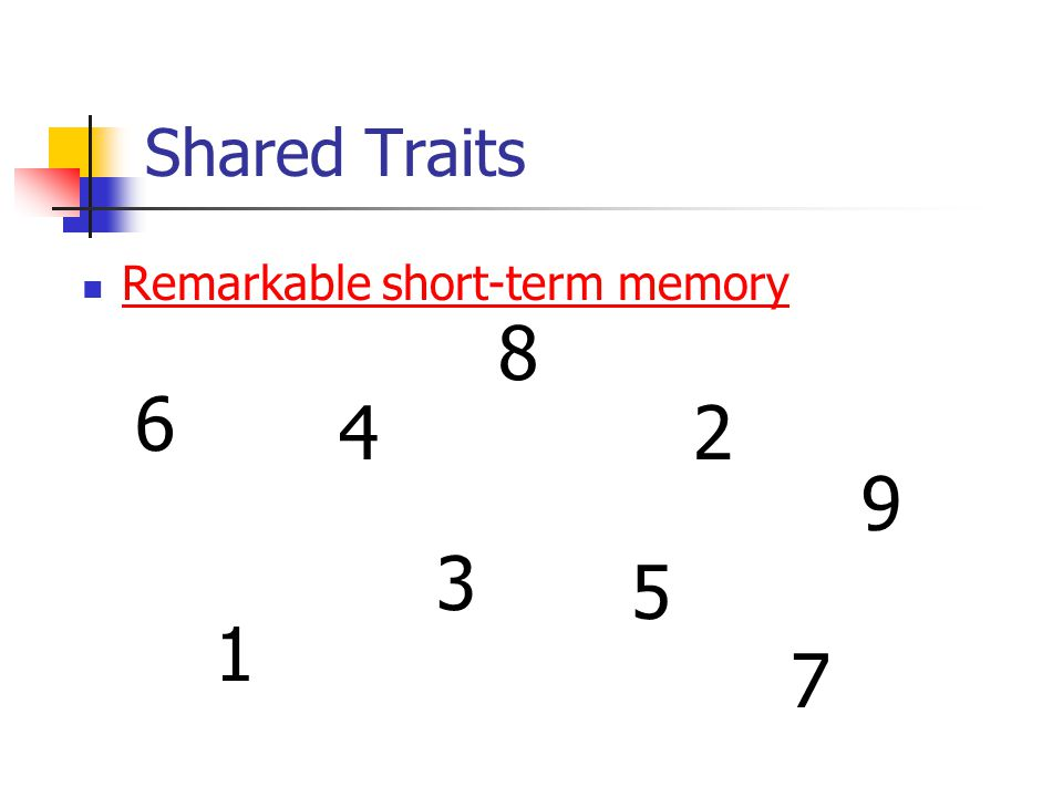 Shared Traits 1 2 3 4 5 6 7 8 9 Remarkable short-term memory