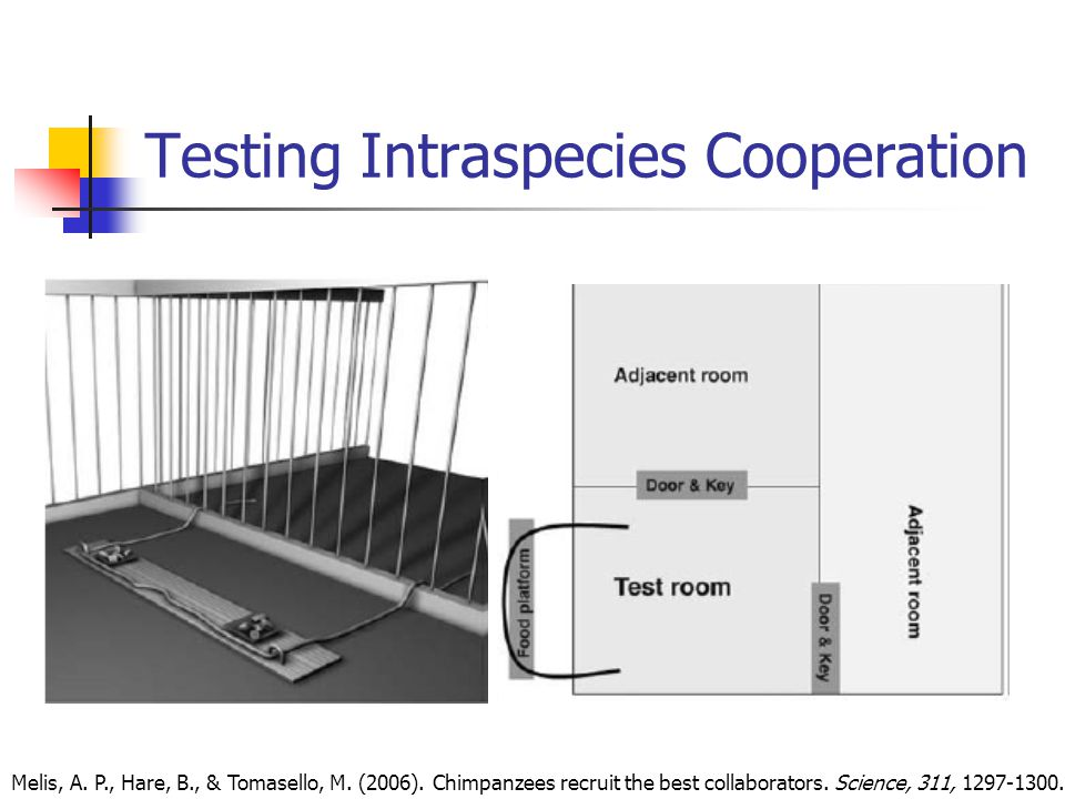Testing Intraspecies Cooperation Melis, A. P., Hare, B., & Tomasello, M.