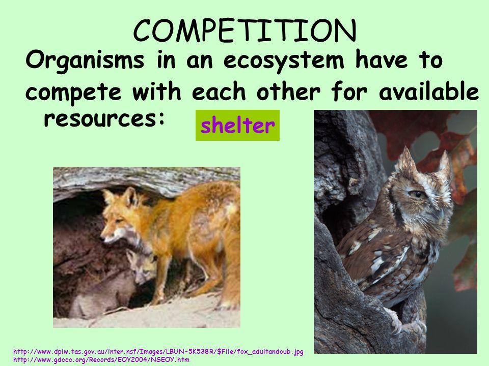 COMPETITION Organisms in an ecosystem have to compete with each other for available resources: http://www.dpiw.tas.gov.au/inter.nsf/Images/LBUN-5K538R