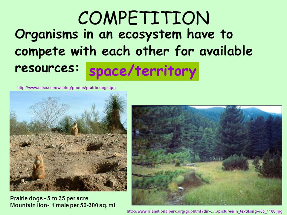 COMPETITION Organisms in an ecosystem have to compete with each other for available resources: space/territory http://www.rilanationalpark.org/gr.phtm