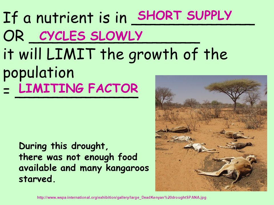 If a nutrient is in _____________ OR __________________ it will LIMIT the growth of the population = _____________ LIMITING FACTOR SHORT SUPPLY CYCLES SLOWLY http://www.wspa-international.org/exhibition/gallery/large_DeadKenyan%20droughtSPANA.jpg During this drought, there was not enough food available and many kangaroos starved.