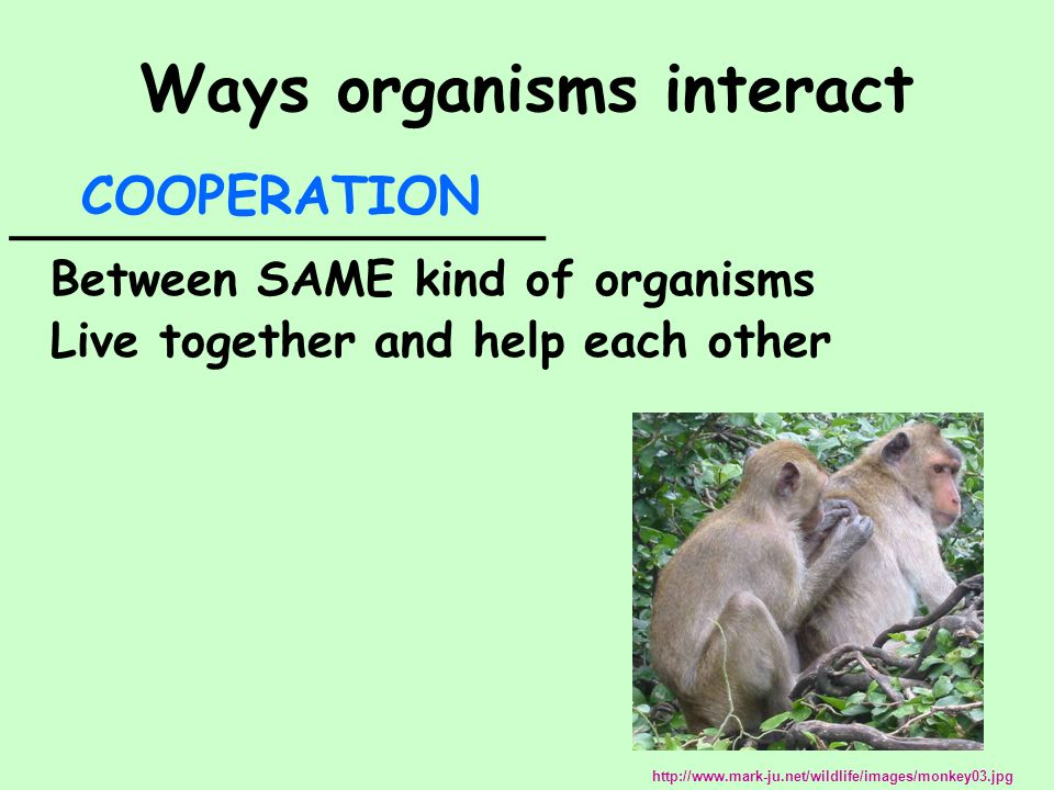 Ways organisms interact __________________ Between SAME kind of organisms Live together and help each other COOPERATION http://www.mark-ju.net/wildlif