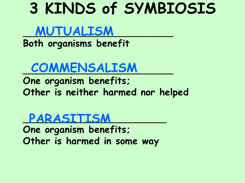 3 KINDS of SYMBIOSIS ______________________ Both organisms benefit ______________________ One organism benefits; Other is neither harmed nor helped _____________________ One organism benefits; Other is harmed in some way MUTUALISM COMMENSALISM PARASITISM