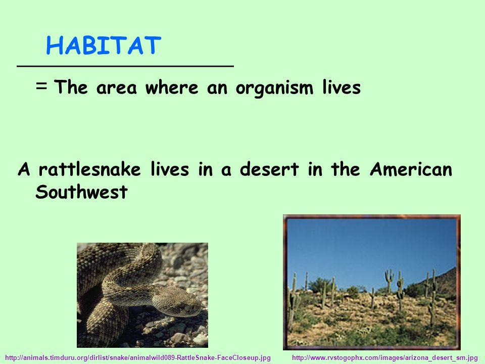__________________ = The area where an organism lives A rattlesnake lives in a desert in the American Southwest HABITAT http://www.rvstogophx.com/images/arizona_desert_sm.jpg http://animals.timduru.org/dirlist/snake/animalwild089-RattleSnake-FaceCloseup.jpg