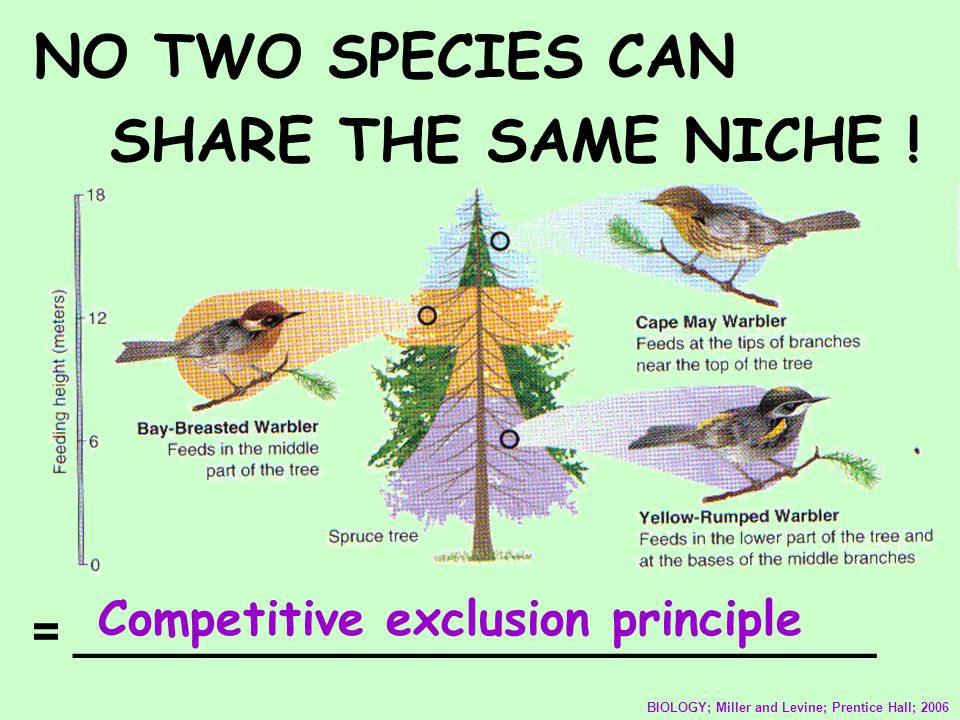 NO TWO SPECIES CAN SHARE THE SAME NICHE ! BIOLOGY; Miller and Levine; Prentice Hall; 2006 = ______________________________ Competitive exclusion princ