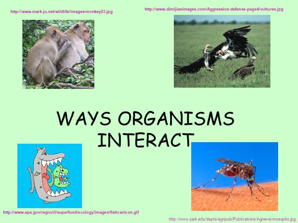 WAYS ORGANISMS INTERACT http://www.epa.gov/region5/superfund/ecology/images/fishcartoon.gif http://www.uark.edu/depts/agripub/Publications/Agnews/mosquito.jpg http://www.mark-ju.net/wildlife/images/monkey03.jpg http://www.dimijianimages.com/Aggression-defense-page4/vultures.jpg