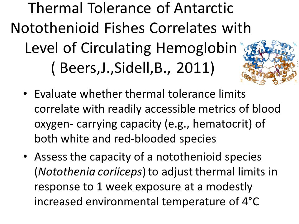 Thermal Tolerance of Antarctic Notothenioid Fishes Correlates with Level of Circulating Hemoglobin ( Beers,J.,Sidell,B., 2011) Evaluate whether thermal tolerance limits correlate with readily accessible metrics of blood oxygen- carrying capacity (e.g., hematocrit) of both white and red-blooded species Assess the capacity of a notothenioid species (Notothenia coriiceps) to adjust thermal limits in response to 1 week exposure at a modestly increased environmental temperature of 4°C