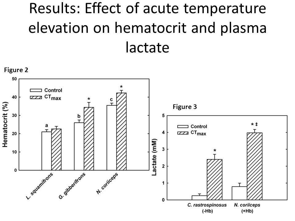Results: Effect of acute temperature elevation on hematocrit and plasma lactate Figure 2 Figure 3