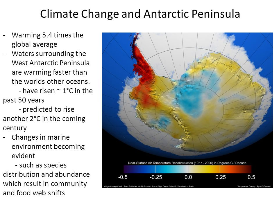 Climate Change and Antarctic Peninsula -Warming 5.4 times the global average -Waters surrounding the West Antarctic Peninsula are warming faster than the worlds other oceans.