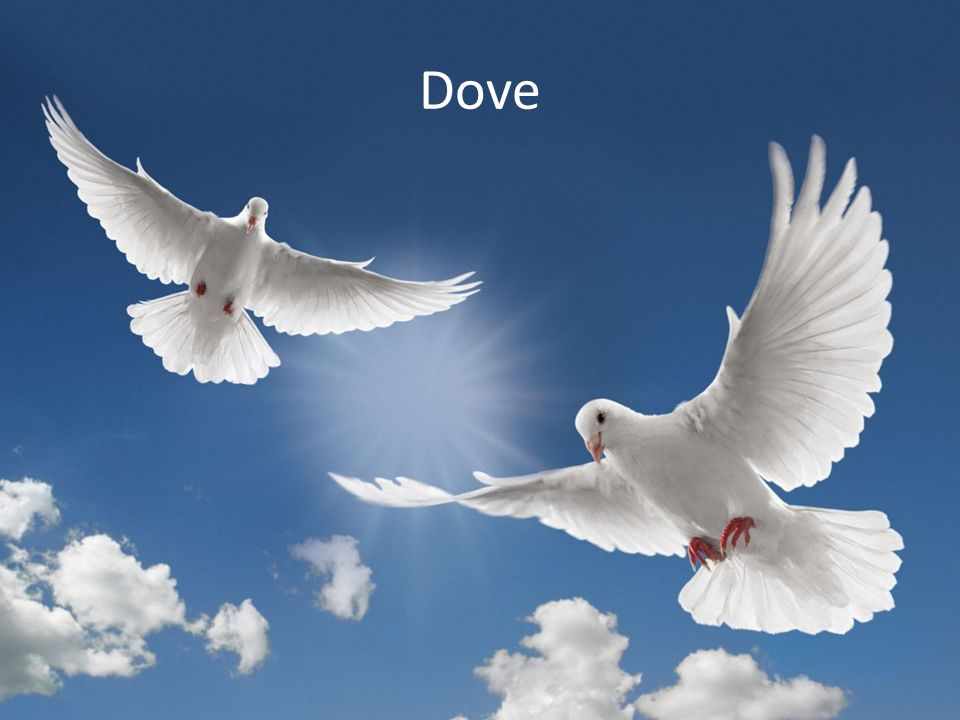 Dove vs Dove Lots of posturing, feinting, stare-downs Eventually, single winner emerges with 50 pts Loss of time, but no one physically hurt Thus both players lose 10 points – Winner = (50 – 10) = 40 – Loser = -10