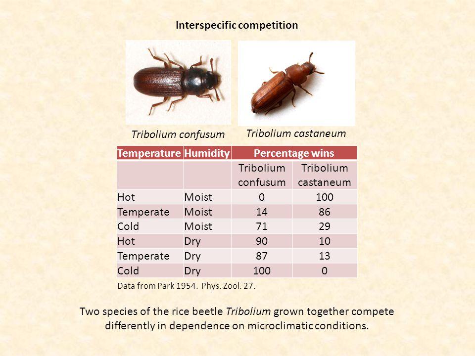 Interspecific competition Tribolium confusum Tribolium castaneum TemperatureHumidityPercentage wins Tribolium confusum Tribolium castaneum HotMoist010