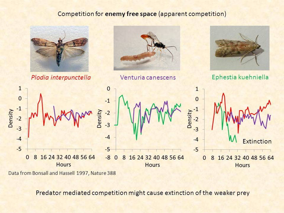 Competition for enemy free space (apparent competition) Data from Bonsall and Hassell 1997, Nature 388 Plodia interpunctellaVenturia canescens Ephestia kuehniella Predator mediated competition might cause extinction of the weaker prey Extinction