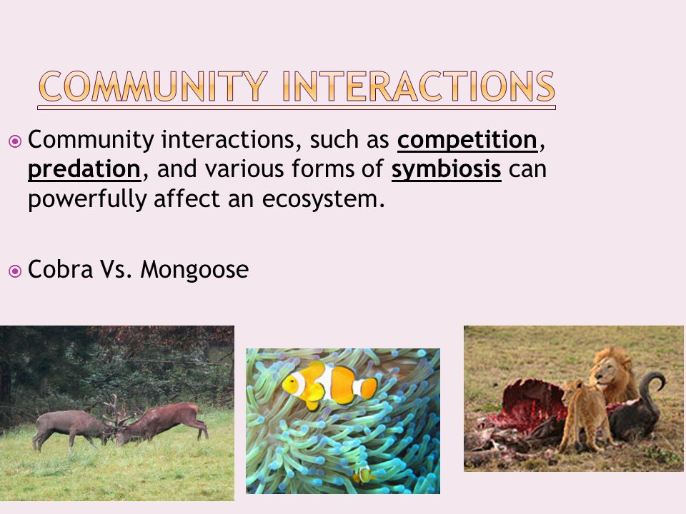  Community interactions, such as competition, predation, and various forms of symbiosis can powerfully affect an ecosystem.