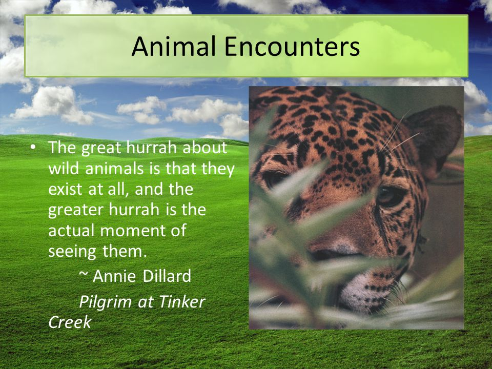 Animal Encounters The great hurrah about wild animals is that they exist at all, and the greater hurrah is the actual moment of seeing them. ~ Annie D