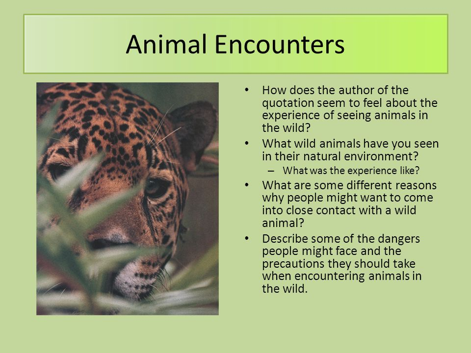 Animal Encounters How does the author of the quotation seem to feel about the experience of seeing animals in the wild? What wild animals have you see