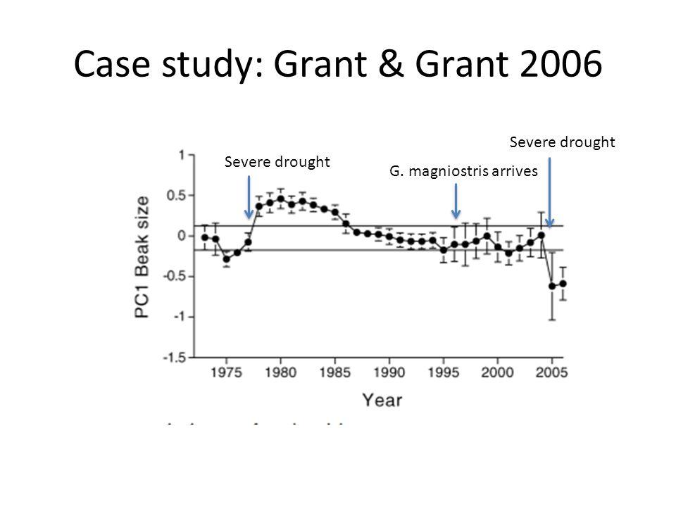 Case study: Grant & Grant 2006 G. magniostris arrives Severe drought