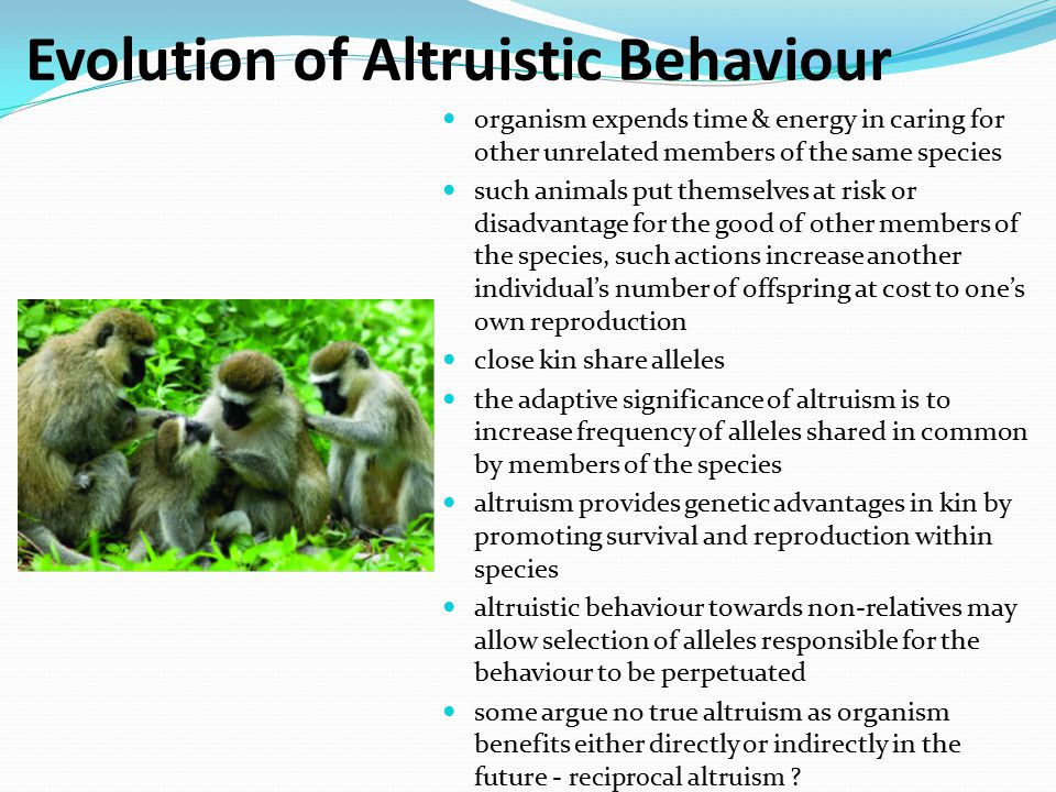 Evolution of Altruistic Behaviour organism expends time & energy in caring for other unrelated members of the same species such animals put themselves