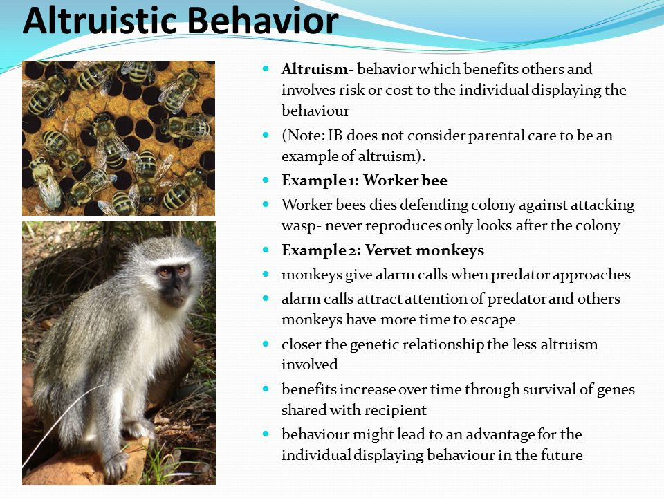 Altruistic Behavior Altruism- behavior which benefits others and involves risk or cost to the individual displaying the behaviour (Note: IB does not c